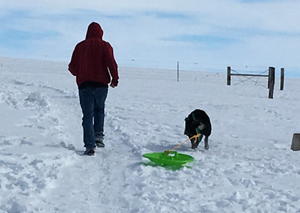 Deron with Tabaliah pulling the Saucer UP the hill 2018-02-28