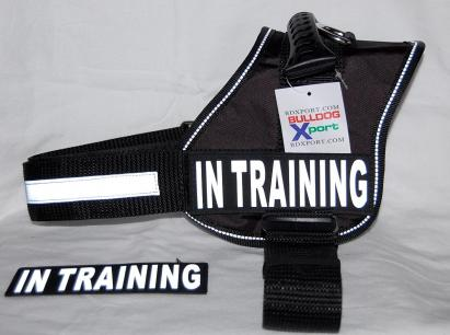 IN TRAINING Harness