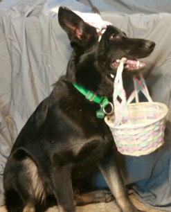 Tabaliah Bunny Ears and Easter Basket 2017-04-14