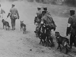 GSD Military Dogs