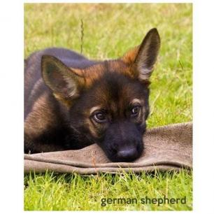 Sable GSD Puppy Journal Cover