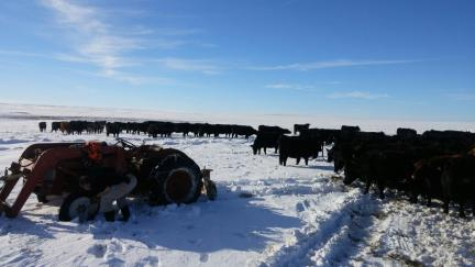 Flat Tire on Tractor and Cattle 2017-01-17
